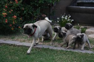 Puppies Chasing Mom by icantthinkofaname-09