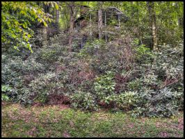 Cabin in Rhododendrons by grandagon