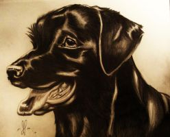 Black Lab by XxXMysticWolfxXx