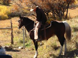 Cowboys 103 .:Stock:. by WesternStock