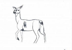 doe, a deer by whenwolveshowl