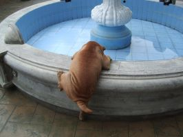 I can't get up Dog Sharpei by Clarisse508