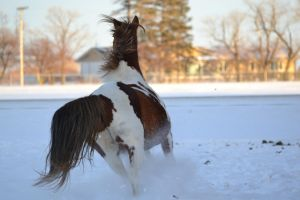 Duke Galloping In The Snow by xPaintTheSkyx