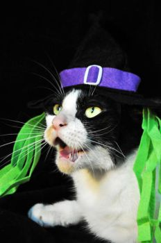 Witch-Cat by JacquiJax