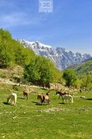 Valbona Valley by archedi