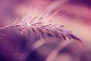 Nature by TammyPhotography