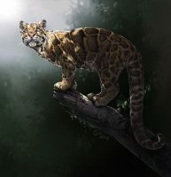 Nebulosa - Clouded Leopard by giovannag