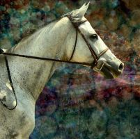 Textured horse by 14658