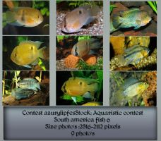 Contest fish pack 6 by AzurylipfesStock