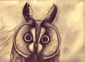 Charcoal Owl by Fabius77