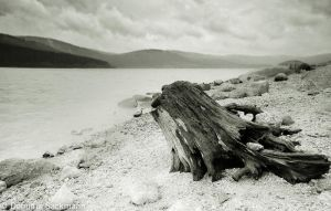 Black Forest Sea I by Domi7788