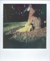 Polaroid 3_13 by Rechbi