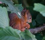 Squirrel by MyPhotos-Chris