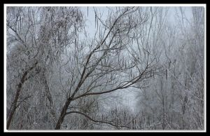 Winter Branches by Aprilvirgo