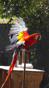 Pretty Parrot by Photos-By-Michelle