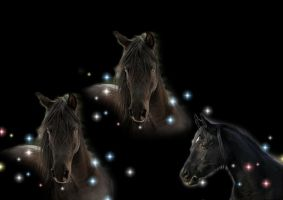 Black horses by Delianne