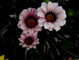 flower stock 16 by hp-abrasion