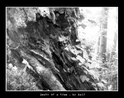 Death of a Tree by aalf