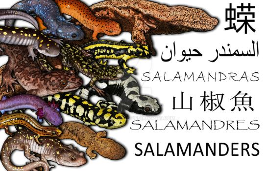 Salamanders Collage by rogerdhall
