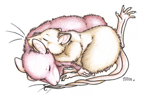 Sleeping rats by x-Mlice