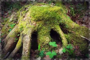 fairies home by miss-gardener