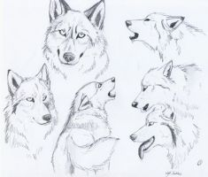 wolfy sketches by SaintWolfOfEden