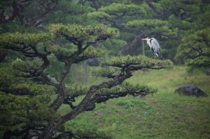 Heron on Pine by Quit007