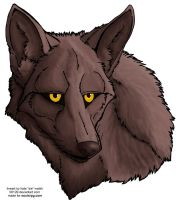 colored coyote face -- free by 00129