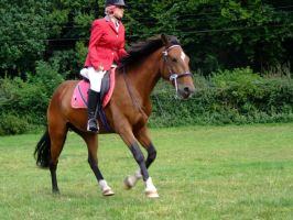 Warmup For Showjumping No Handed Canter by StarCrossedPsycho