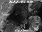 R.I.P. Lil' Bear by fuzzlekitty