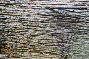 Aged Wood II by LogicalXStock