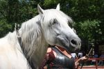 Andalusian Head by roar-shack-stock