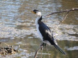 Heron by CrystaltheEchidna