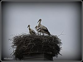 2 little Storks this Year by bluediabolo