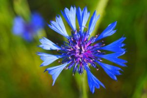 Flower power by madaphotography