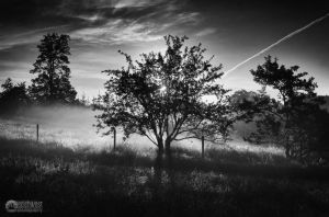 black and white sunrise by all17