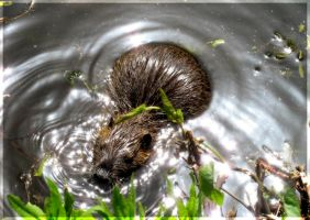 Hey, Coypu, Come On! by passion-flower3