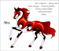 CH Miros by Everland-Stables