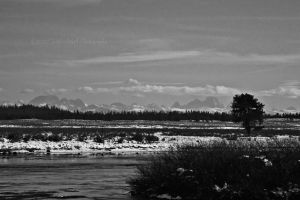 BwTeToNs by melly4260