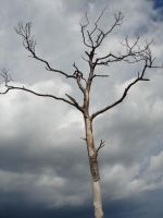 Dead Tree and Ominous Clouds 1 by steveclaus