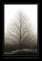 Tree in Freezing Fog by UrbanRural-Photo