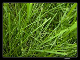 Piece Of Grass by Adamoos