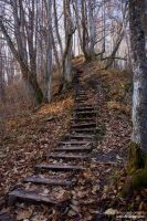 Stairs and the Fall by rici66