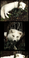little White Wolf II by AdarkerNEMISIS