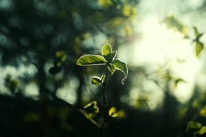 Green moment. by Hersmallworld