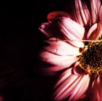 macro by clarisaponcedeleon