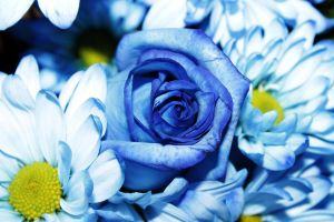 roses are blue by ksham25
