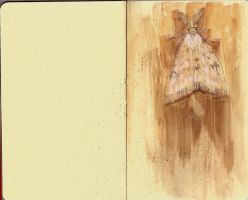 Moleskine- Moth by Tonks-92