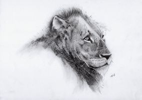 Lion from relo trip by cardi777