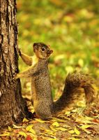 Squirrel by looksforthelight